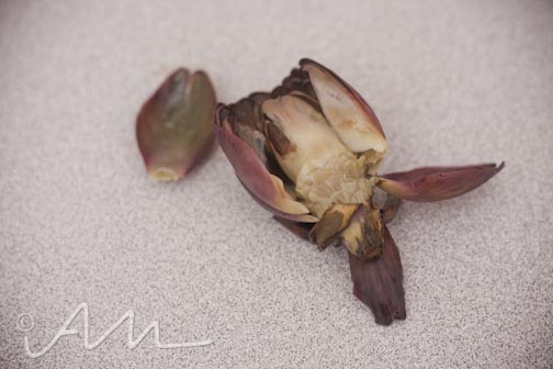 purpleartichokes-9