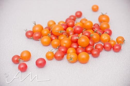 maters-1