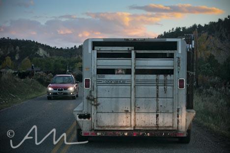 cattleroundup-13