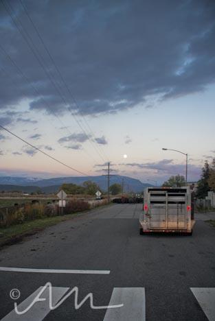 cattleroundup-16