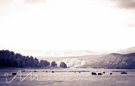 cattleroundup-5