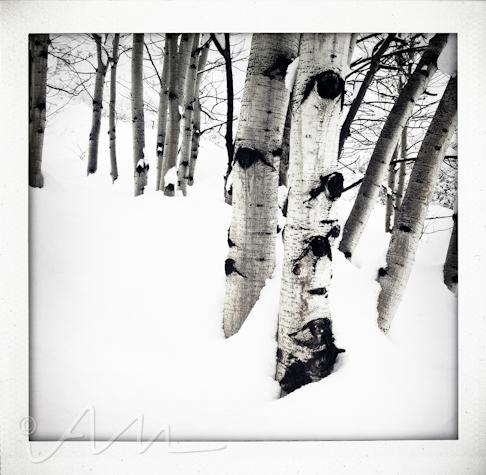 snowyaspens-2
