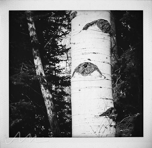 eyesoftheaspens-10