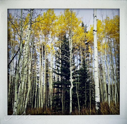 eyesoftheaspens-13