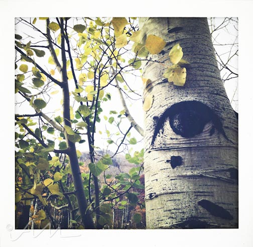eyesoftheaspens-16