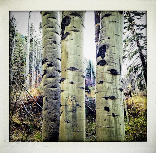 eyesoftheaspens-2
