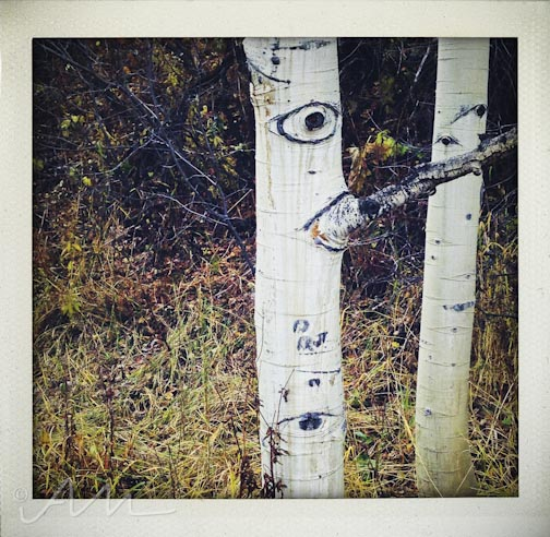eyesoftheaspens-24