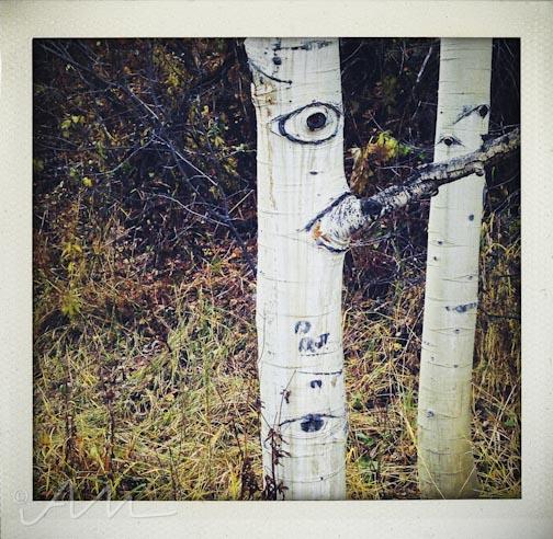 eyesoftheaspens-24