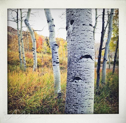 eyesoftheaspens-26