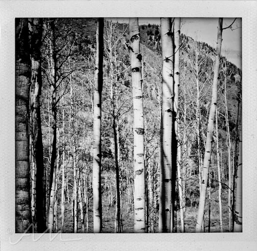 eyesoftheaspens-4