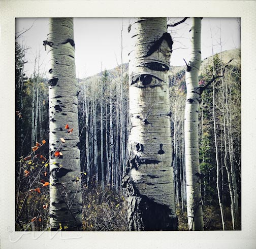 eyesoftheaspens-8