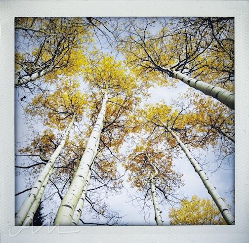 fallfoliage-12