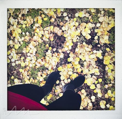 fallfoliage-13