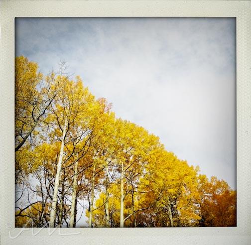 fallfoliage-16
