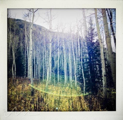 fallfoliage-5