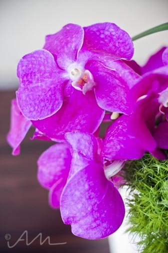youcanlearnalotfromtheflowers-24