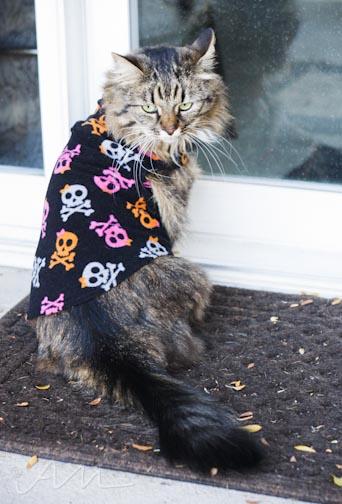 scaredycat-2